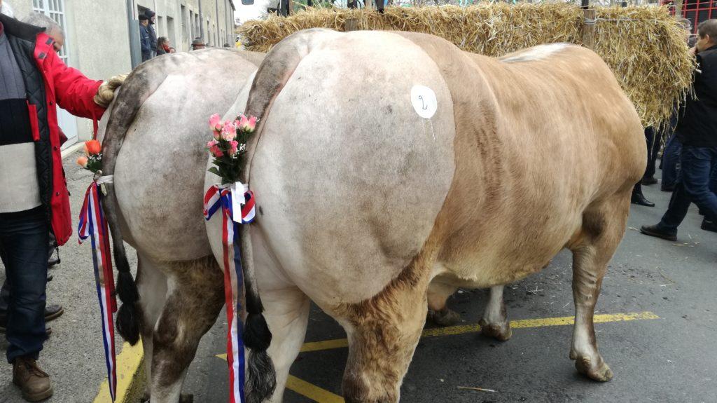 La fête des Bœufs gras de Bazas, une tradition vieille de 734 ans